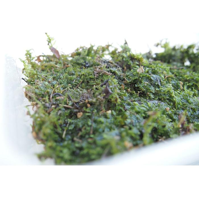 Terrestrial Moss